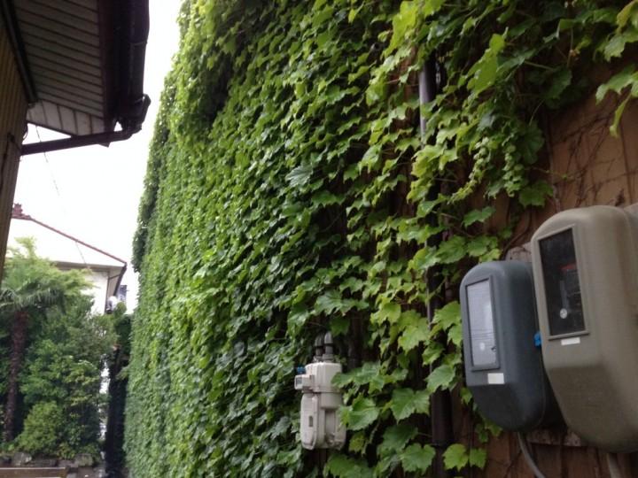 さんきらくの外壁