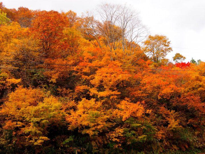 入広瀬の紅葉