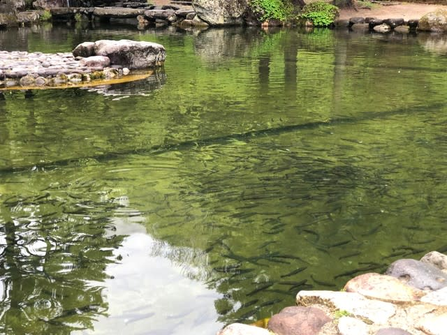 奥日光ファミリーランド白根魚苑・ニジマスの釣り堀